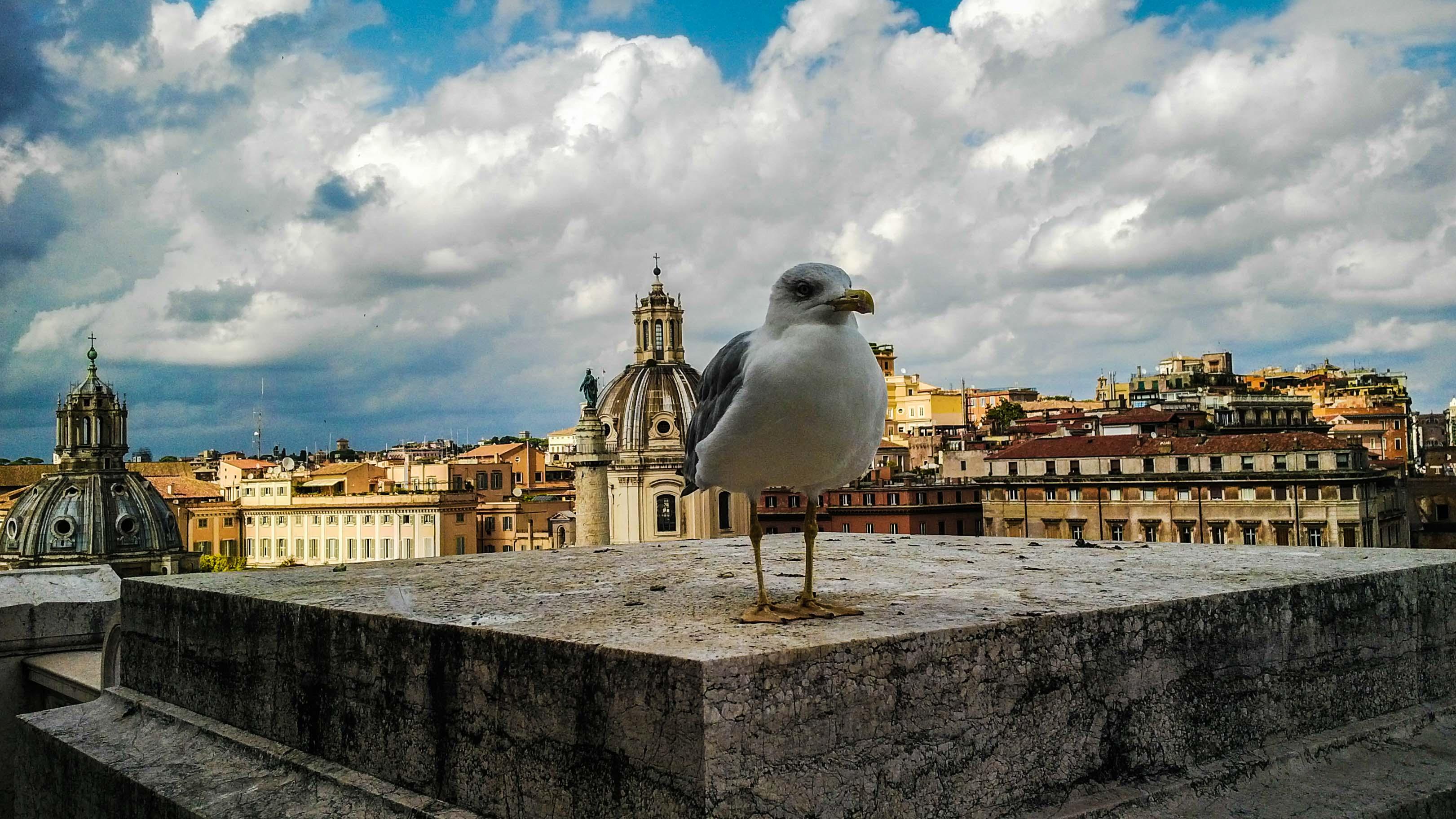 Roma_cel-8.jpg