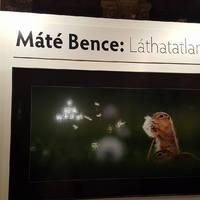 Természetfotók a Néprajzi Múzeumban - Máté Bence: Láthatatlanul