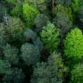 Színes cetliktől a fenntarthatósági tervig