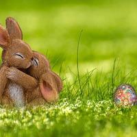 Húsvét van, és a nyulak sörrel koccintanak