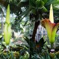 A világ legnagyobb virágai