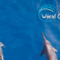 Az Óceánok Világnapja és két szörfös, aki mindent megtesz, hogy mentse az óceánok élővilágát