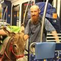 Banka Roland: utazik a szamár a vonaton, avagy saját képre formált valóság