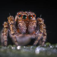 A pók, aki ember lett - legalábbis nagyjából