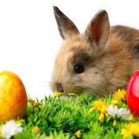 8 jópofa, kreatív húsvéti tojás
