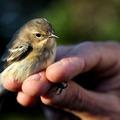 Vigyázz a madárra, ha kertedbe repül... meg akkor is, ha nem