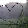 Legbiztosabban a házastárs tehet tönkre - avagy a szerelem csapásai