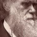 Darwinról, illúziók nélkül