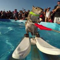 5 izgalmas sport a vizek szerelmeseinek