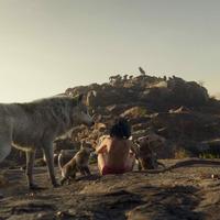 Túlélés a dzsungelben Bear Grylls-szel