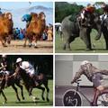 Megvan a lovaspóló? Képzeld el ezt a sportot elefánttal vagy tevével...ugye?!
