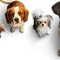Egy életcélt kereső kutya négy élete