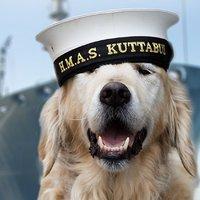 Tanulságos és megható történetek keményen dolgozó kutyákról