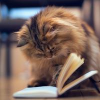 Kedvenceink olvasás közben