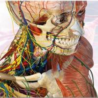 5 furcsaság az emberi szervezetről
