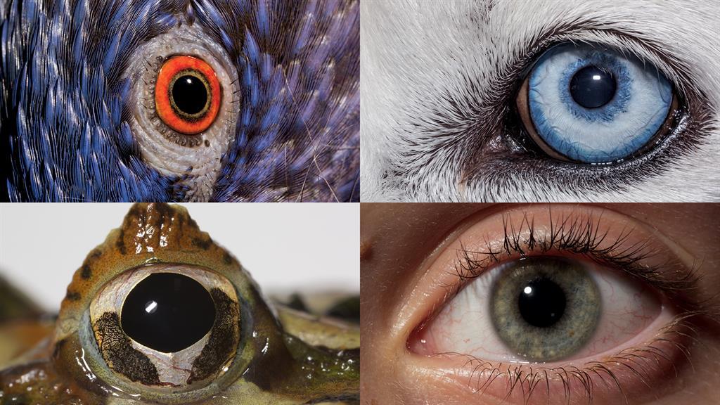 160114-ngm-evolution-of-eyes-mm8355-posterframe_1024x576_601766979954.jpg