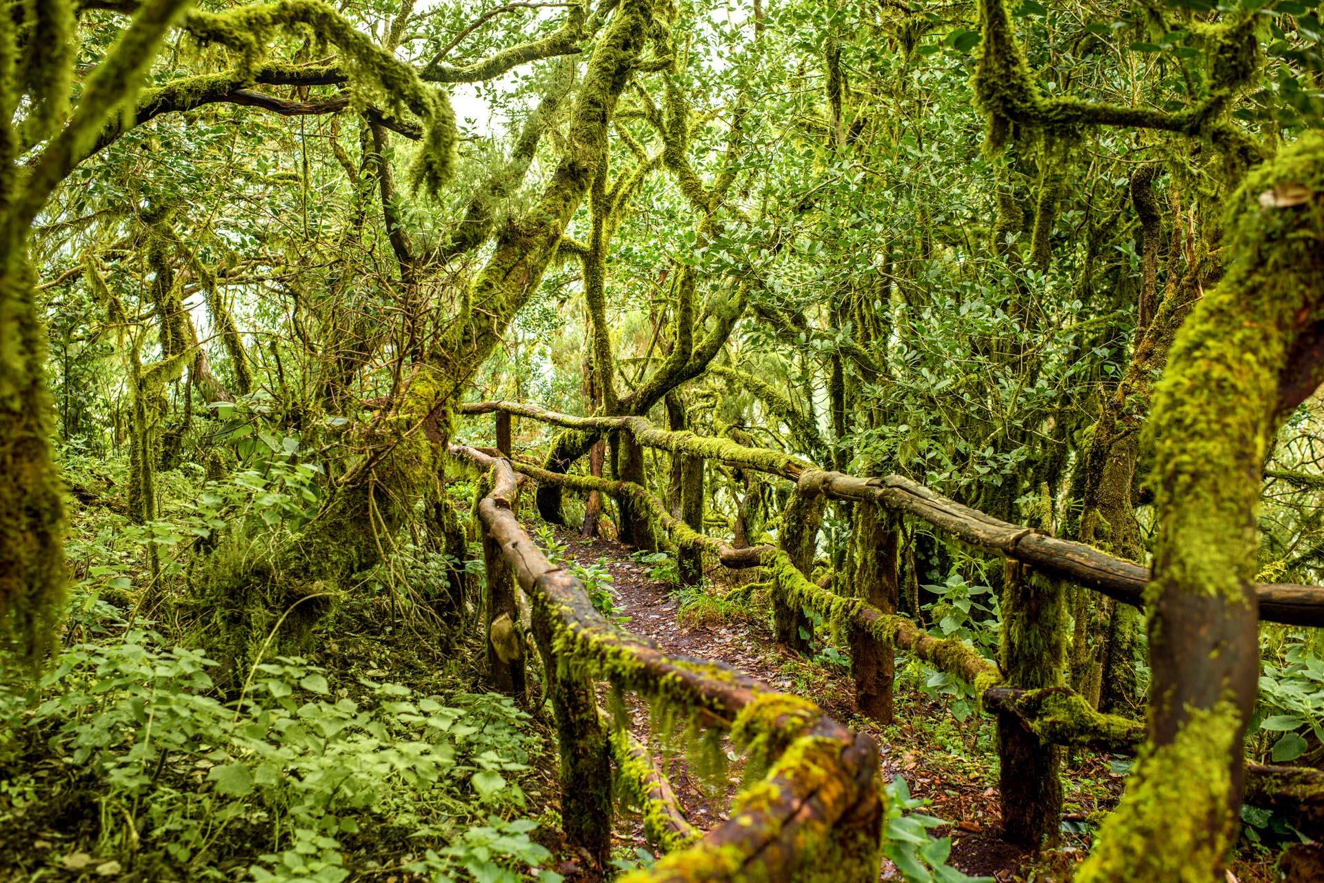 aluz-ruta-naturalista-por-tenerife-y-la-gomera-en-semana-santa-23019.jpeg