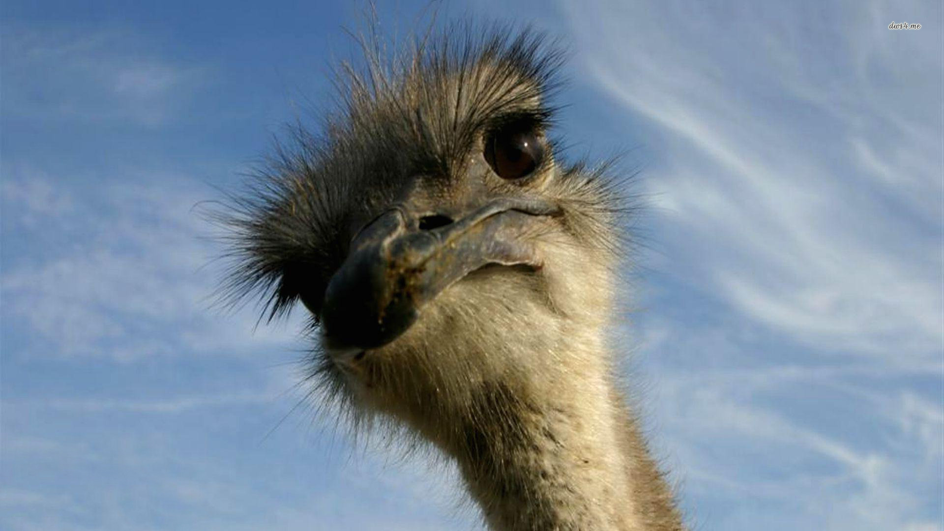 funny-looking-ostrich-1.jpg