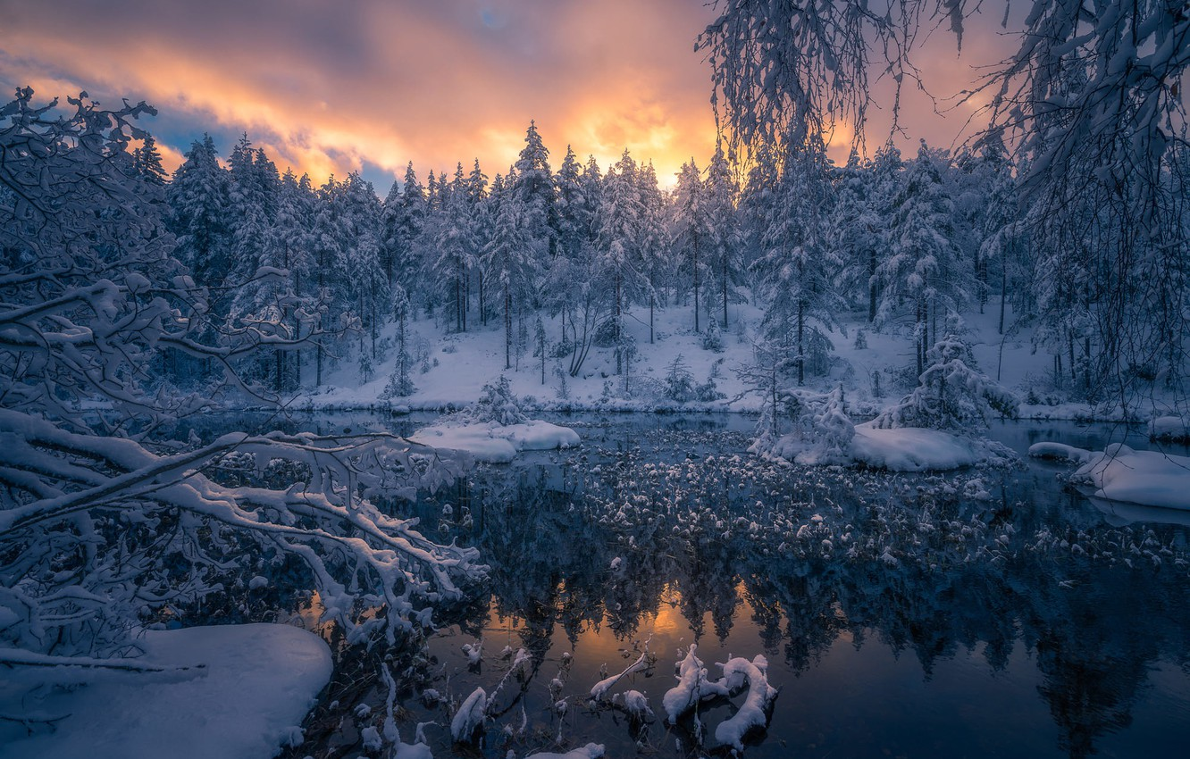 norwegian-woods-norvegiia-ringerike-norway.jpg