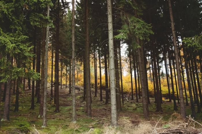 woods-843215_960_720.jpg