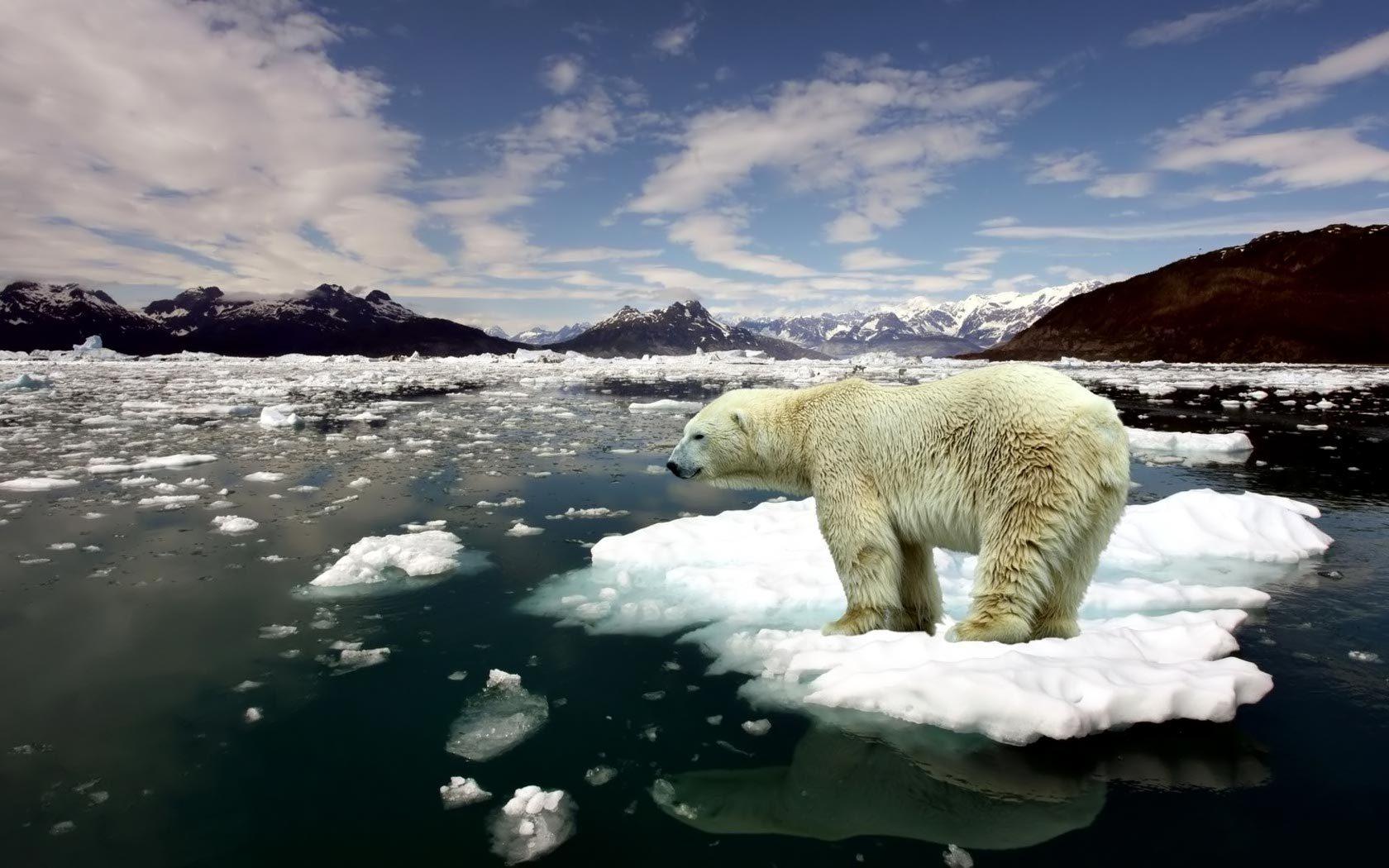 1680x1050-jegesmedve-172.jpg