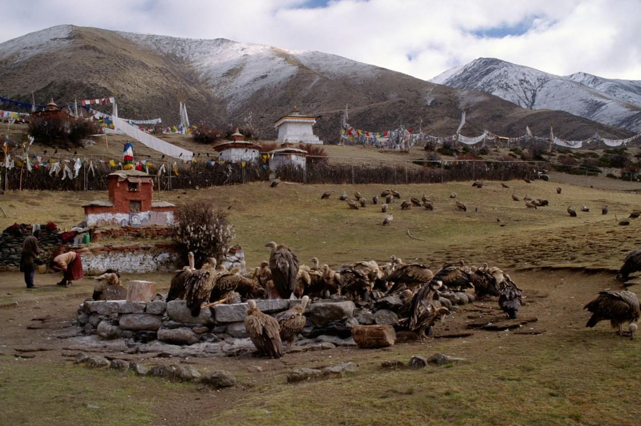 201501-tibet.jpg