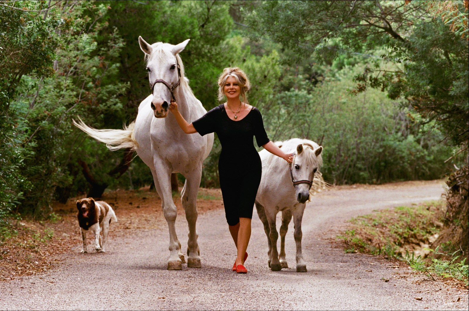 brigitte-bardot-with-horses-present-day.jpg