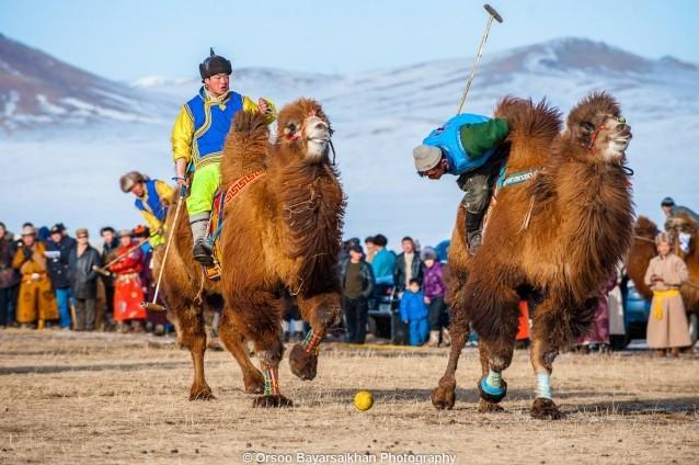 camel-polo.jpeg