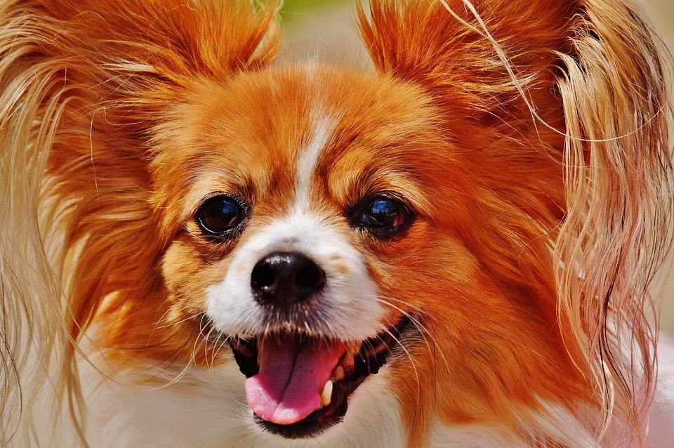 dog-1532754_960_720.jpg
