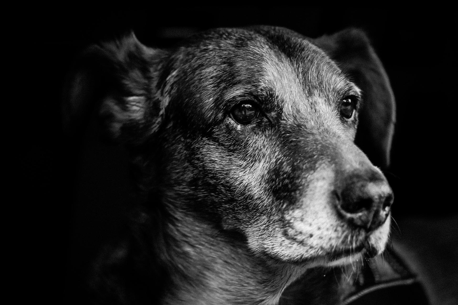 dog-903213_1920.jpg
