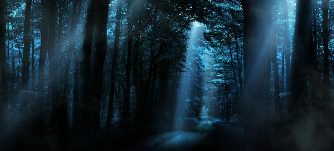 forest_6_highlights_1100.jpg