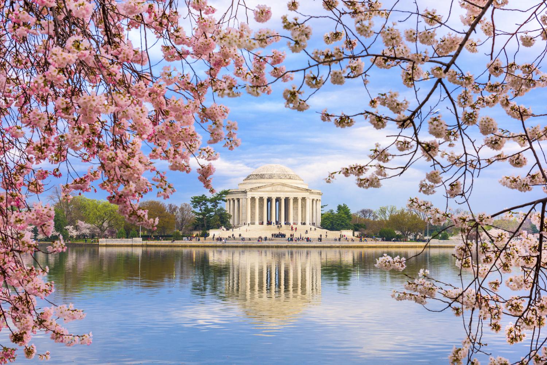 istock_jefferson_cherry_blossom.jpg