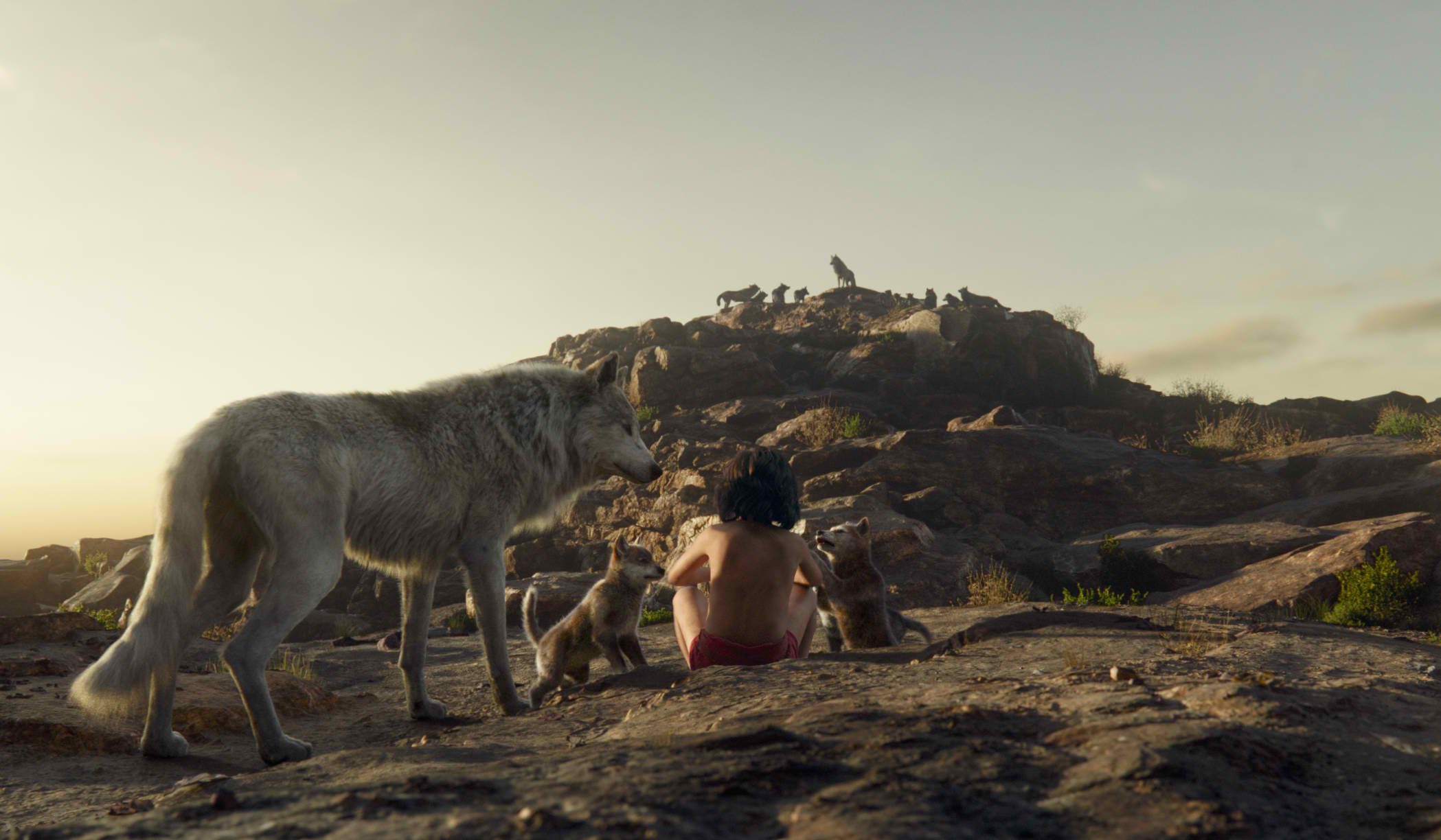 jb-raksha_mowgli.jpg