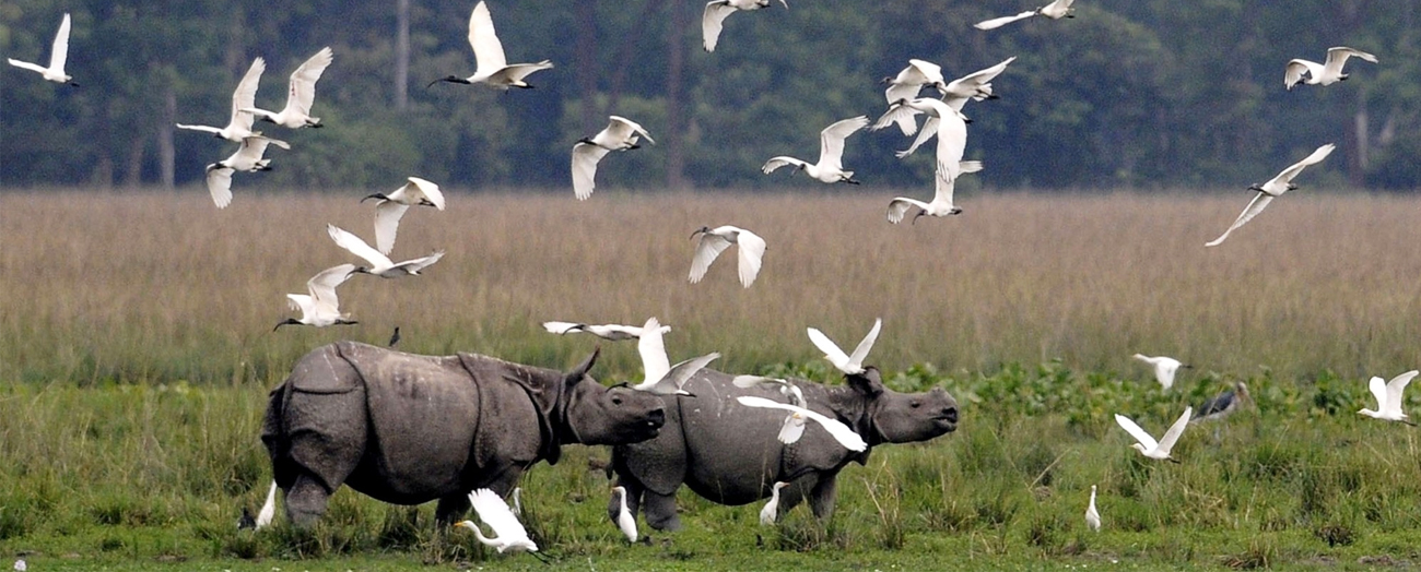 kaziranga-national-park2.jpg