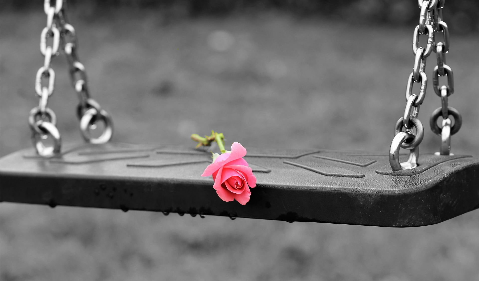 pink-rose-on-empty-swing-3656894_1920.jpg