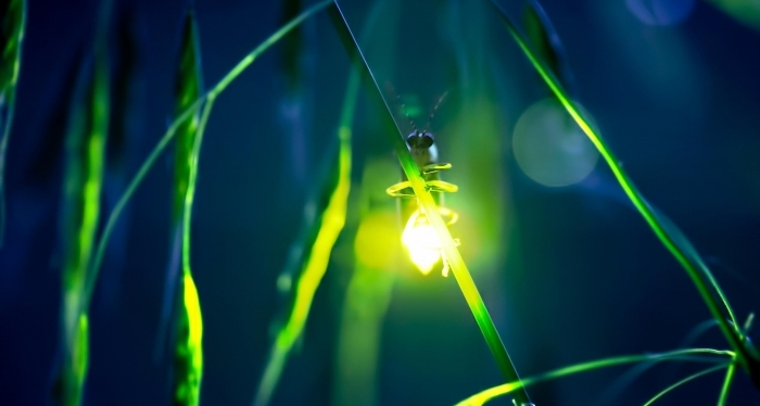 schreiber_72678_bioluminescent_glow.jpg