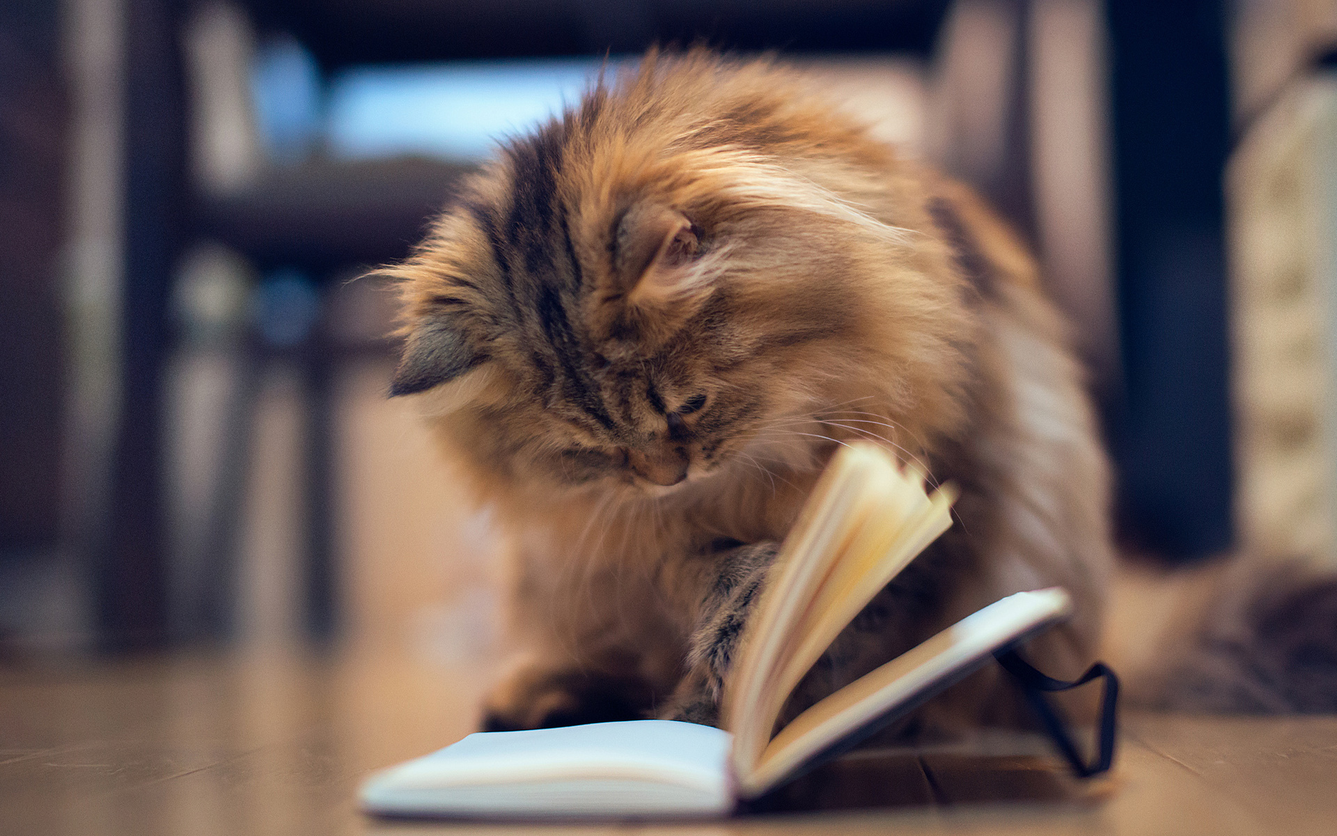 smart_kitty_reading_book.jpg