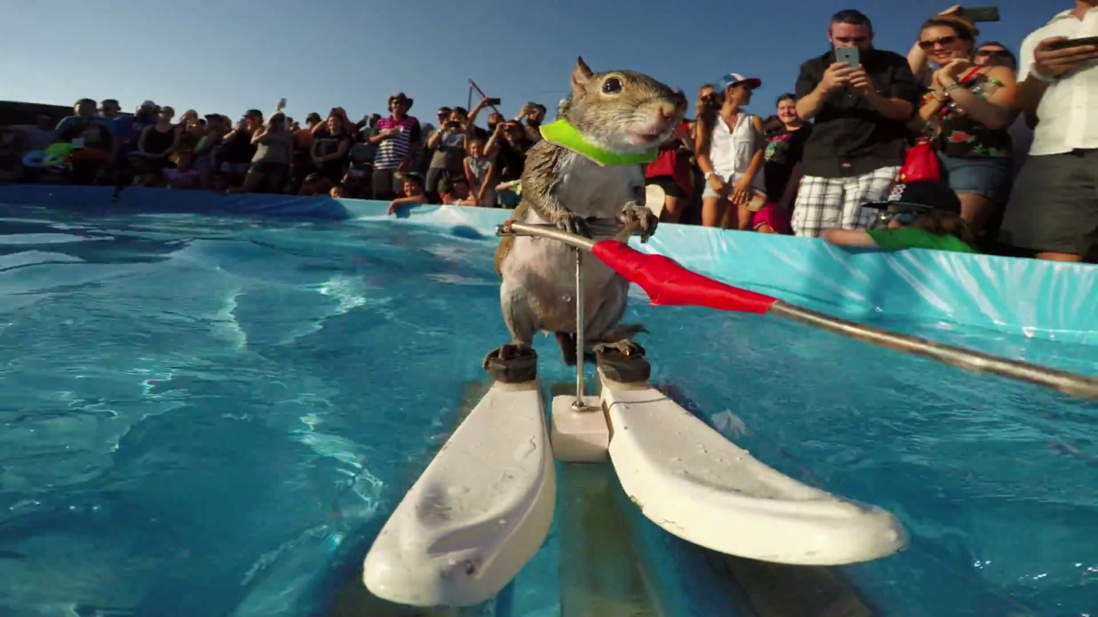 water-skiing-squirrel.png