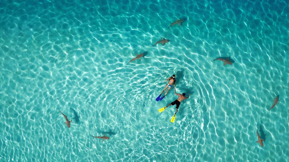 """A """"Természet"""" kategória első helyezettje Tahitiflyshoot: Sznorkelezés cápákkal."""