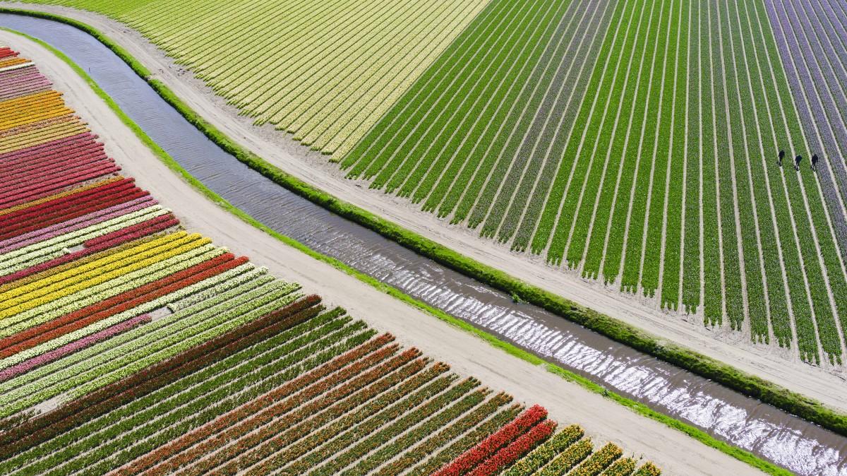 """A """"Helyek"""" kategória harmadik helyezettje Anders@andersa.com Tulipánföldek című fotója."""