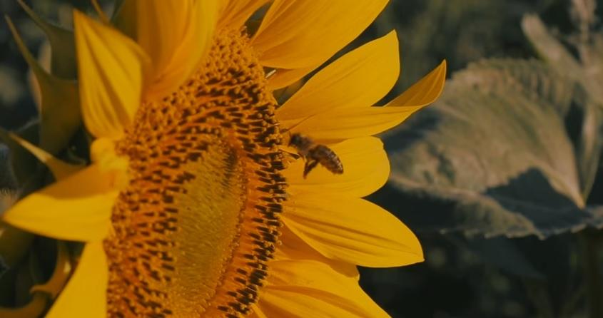 Jelenet a Méhek nyomában című ismeretterjesztő filmből Forrás: Médiaklikk