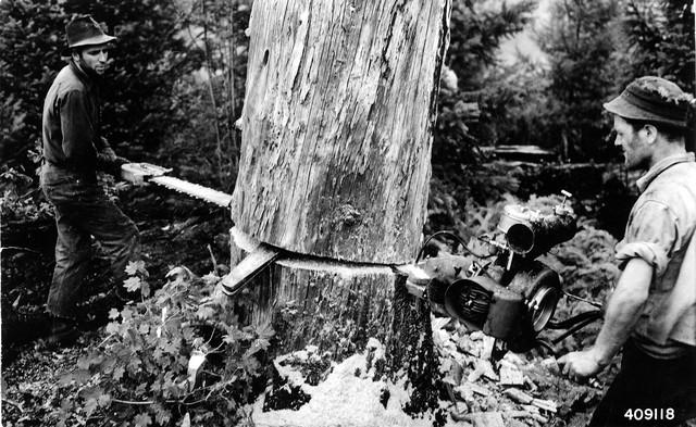 Kétszemélyes láncfűrész az USA-ban, a '40-es években – Forrás: U.S. Forest Service