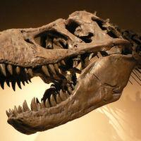 Sem meleg-, sem hidegvérűek nem voltak a dinoszauruszok