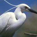 Szabad préda a Kárpát-medence összes létező faja