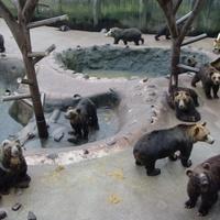 Ukrajnában jobb dolguk van a medvéknek, mint az embereknek