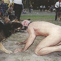 Botrányos állatszeximmitáció a művészeti vásáron