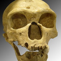 Kergemarhakór irthatta ki a neandervölgyieket