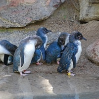 Szabadságot vesznek ki a fáradt pingvinszülők