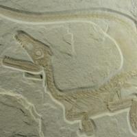 Furcsa dinoszauruszra bukkantak