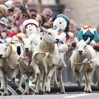 Utcai birkafutammal ünnepelek Skóciában